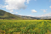 Landscape of yellow wild flowers. — Stock Photo