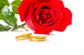 Red rose and wedding rings over white — Stock Photo