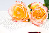 Red yellow rose over a book — Foto Stock