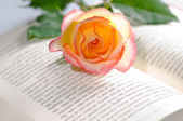 Red yellow rose over a book — Stock Photo