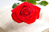 Red rose over a book — Stock Photo