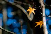 Laranja folha de uma árvore num cenário de inverno — Foto Stock