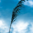 One blade of grass in the sky — Stock Photo