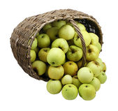 Green apples in basket isolated — Stockfoto
