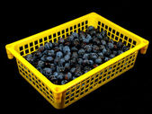 The yellow container with plum — Stock Photo