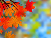 Autumnal maple, background. — Stock Vector