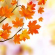 Royalty-Free Stock Vector Image: Orange autumn leaves, shallow focus.