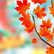 Autumn leaves, very shallow focus. - Stock Vector