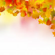 Autumn leaves border for your text. — Stock Vector