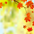 Autumn leaves border for your text. — Stock Vector #3985070