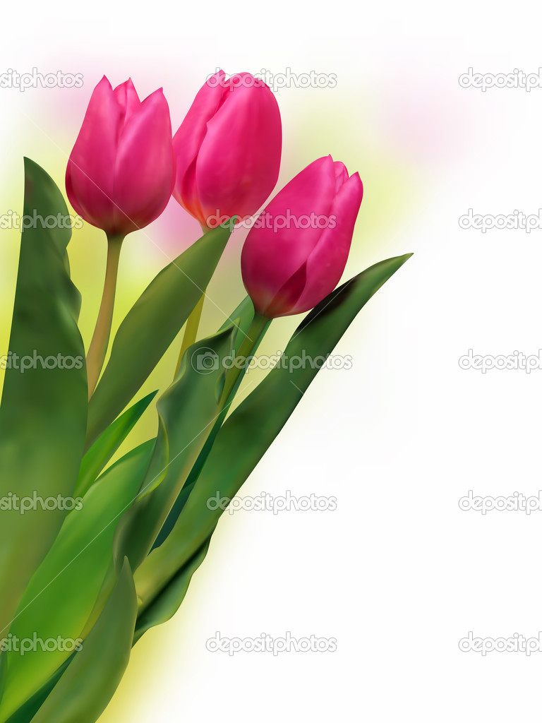 Bouquet of the fresh tulips on white background. EPS 8 vector file included  Stock Vector #4076110