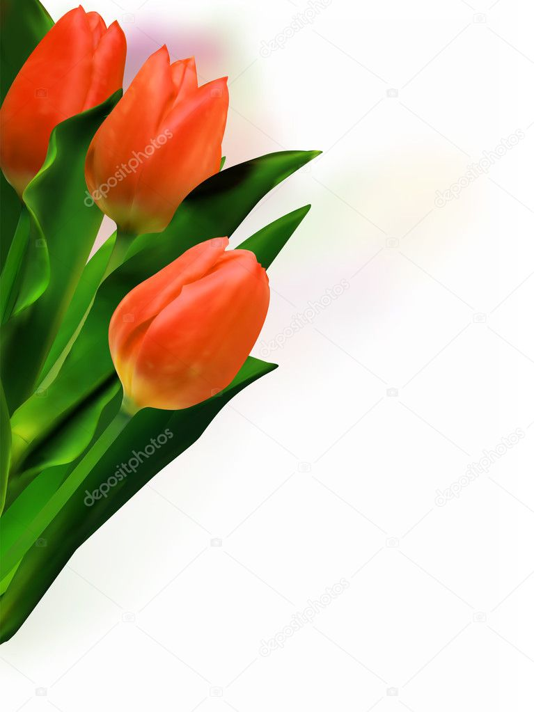 Bunch of beautiful spring flowers - colorful tulips against white background. EPS 8 vector file included — Stock Vector #4084459