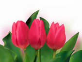 Bukiet kwiatów wiosna — Wektor stockowy