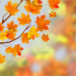 Colorful autumn leaves background. — Stok Vektör