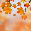 Autumn Leaves, Very Shallow Focus — 图库矢量图片