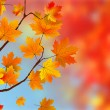 Colorful Autumn Leaves — Stockvektor