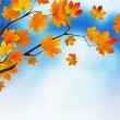 Autumn colored leaf on blue sky. — Stock Vector