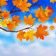 Beautiful Autumn Background against clue sky. — Stockvektor
