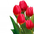 Royalty-Free Stock Vector Image: Beautiful red tulips card template. EPS 8