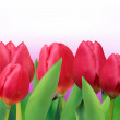 Colorful tulips bouquet template card. EPS 8 — 图库矢量图片