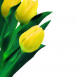 Stock Vector: Yellow tulips against white background. EPS 8
