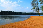 Shore of the lake in the woods — Stock Photo