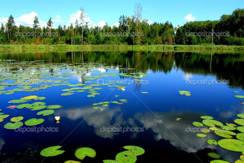 Forest lake with water lilies stock photo 5358017 for Lago con ninfee