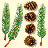 Pine Tree Branches and Cones — Vector de stock