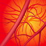 ������, ������: Blood system