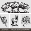 Set of different tiger. Vector. - Stock Vector