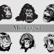 Monkey Head. Vector - Stock Vector