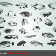 Vector set: fish, shells and seafood — Vettoriali Stock