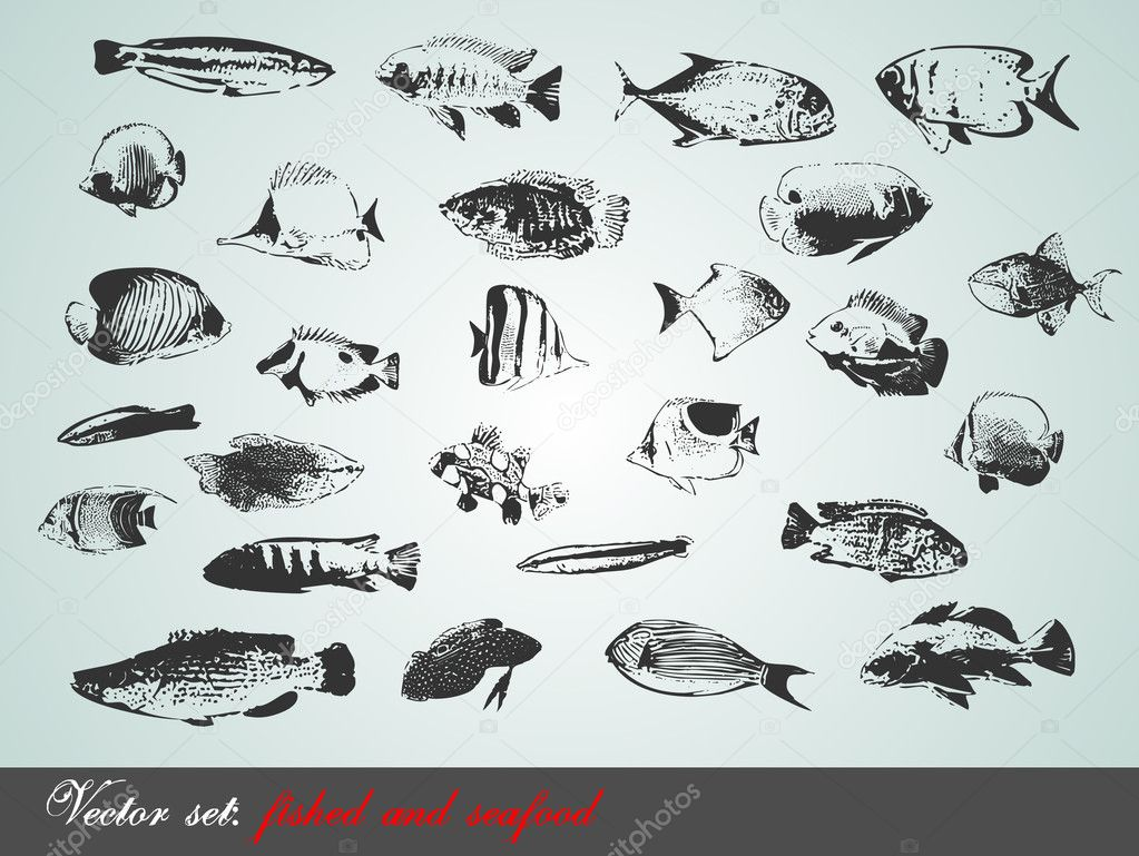 Vector set: fish, shells and seafood - variety of detailed vintage illustrations — Stock Vector #4646282