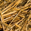 Yellow Beveled hay — Stock Photo