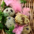 Quail eggs with green grass and feathers Easter still life — Stock Photo