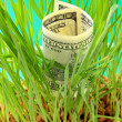 One Hundred dollar bill growing in the green grass — Stock Photo