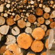 Oodles cut hornbeam logs as firewood - Foto de Stock