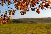 Sås med höstvete fält — Stockfoto