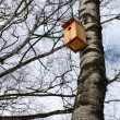 Birdhouse hanging on the trunk of a birch — Stock Photo