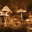 Постер, плакат: Group mushrooms Sepia