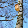 Bird house hanging on a birch. — Stock Photo