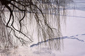 Willow branches over frozen river — Stock Photo