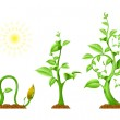 Plant Growth — Stock Vector #3993354
