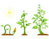 Plant Growth — Stock Vector
