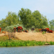 Royalty-Free Stock Photo: Cattle near the pond