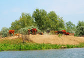Cattle near the pond — Foto Stock
