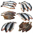 Set fish collection — Stock Photo #4639895