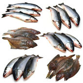 Set fish collection — Stock Photo