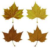 Herfstbladeren met uitknippad — Stockfoto