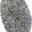 Stock Vector: Editable vector fingerprint